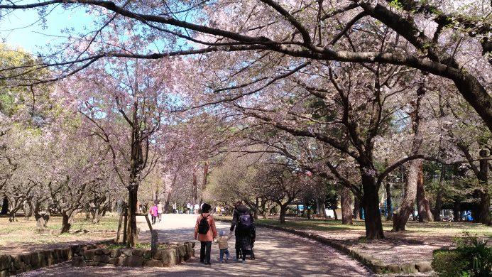 大宮公園 花見
